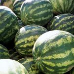 BEHIND THE WATERMELON: THE ICE BOX