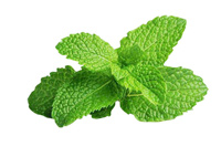 mint-leaves