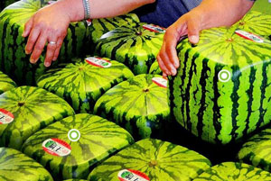 cube-shaped-watermelons