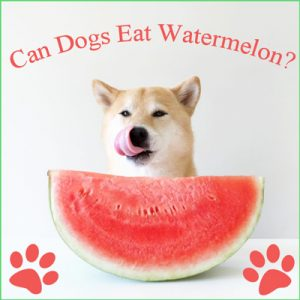 can-dogs-eat-watermelon-image