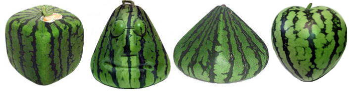 different-shaped-watermelons
