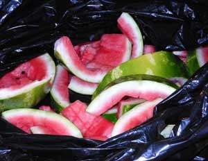 watermelon-in-garbage-bin