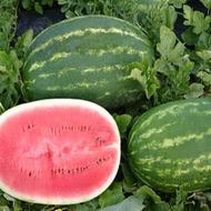 estrella-watermelons