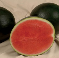sweet-gem-watermelons