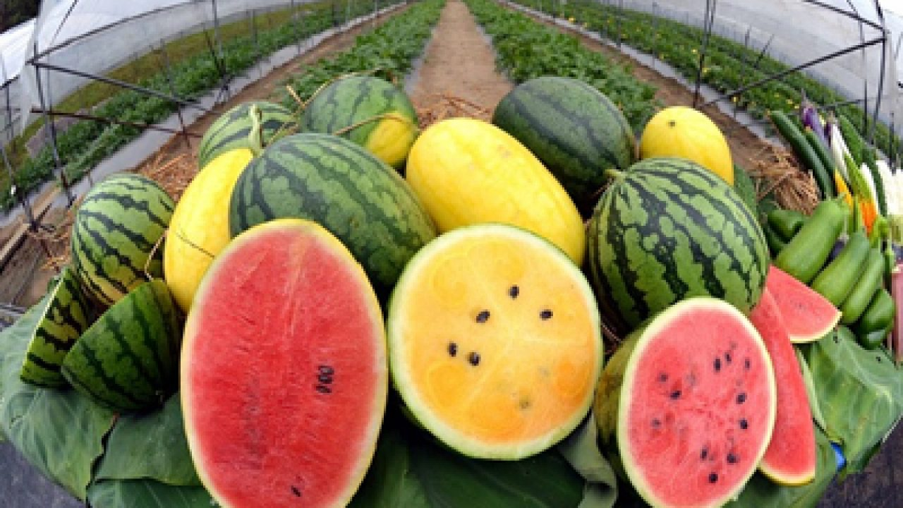 GREAT Color, Details about  /Super Chuck Jr Watermelon//Red SPECIAL COLOR